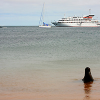 The MV Galapagos Explorer II and a Galapagos Sea Lion at Bartholomew Island. Ecuador, South America