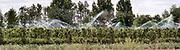 Nederland, Deest, 15-5-2020 Een fruitteler in het land van maas en waal beregent zijn boomgaard nat dmv sproeiers, watersproeiers. Foto: Flip Franssen