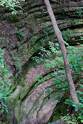 A tall tree grows out of a canyon created by rings of earth and stone