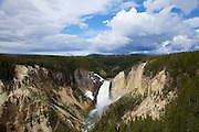 Yellowstone River Lower Falls from Lookout Point in <br /> Yellowstone National Park
