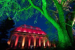 Edinburgh, Scotland, United Kingdom. 24 November, 2017. Edinburgh's newest festive event, Christmas at the Botanics, opened this evening . The illuminations held inside Edinburgh's Royal Botanic Gardens runs for 29 nights. The Glasshouse illuminated in spectacular colours.