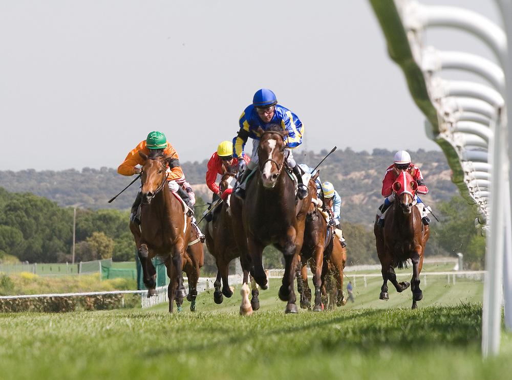 Horse racing at Zarzuela Hippodrome in Madrid (Spain).<br /> <br /> Carrera de caballos en el Hipódromo de la Zarzuela de Madrid (España).