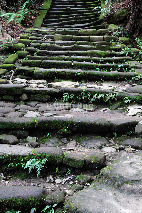 with weeds and moss covered old stair