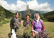 Women collecting flowers near Dobërdol, Peaks of the Balkans trail, Albania © Rudolf Abraham