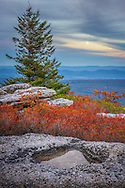 The clouds part briefly to provide a window sized view of the full moon, as the distant mountain blues contrast agains the autumn reds of the huckleberry bushes and greens of the flagged pines broken up only by the giant stones of Bear Rocks in the Dolly Sods Wilderness of West Virginia.