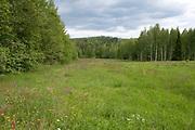Wild Meadow Field, near Hiidenportti National Park, Finland, in Sotkamo in the Kainuu region