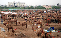 KARACHI, Sept. 12, 2016 (Xinhua) -- People buy camels at an animal market for the Eid al-Adha festival in Karachi, Pakistan, Sept. 12, 2016. Muslims across the world celebrate the annual festival of Eid al-Adha, or the Festival of Sacrifice. (Xinhua/Arshad).****Authorized by ytfs* (Credit Image: © Arshad/Xinhua via ZUMA Wire)
