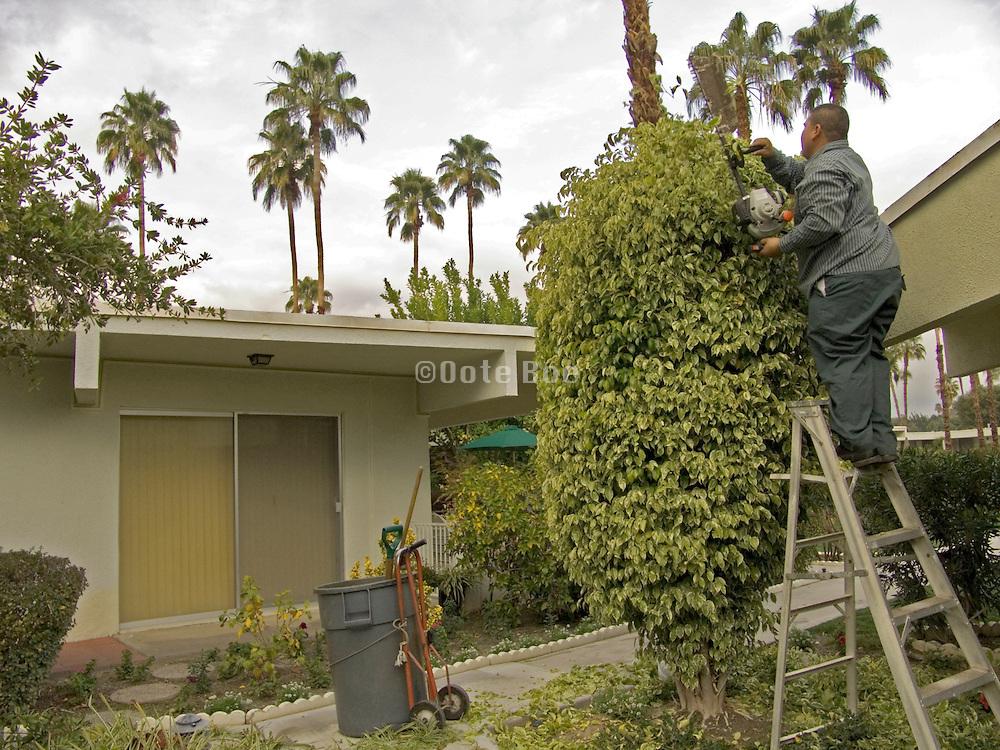 gardener standing on top of a ladder