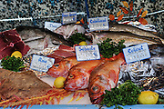France, Paris, an outdoor, street food market a variety of fresh fish on display