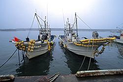 Shrimp Boats At Isohama Port