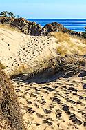 sand dunes ocean beach, whangarei heads