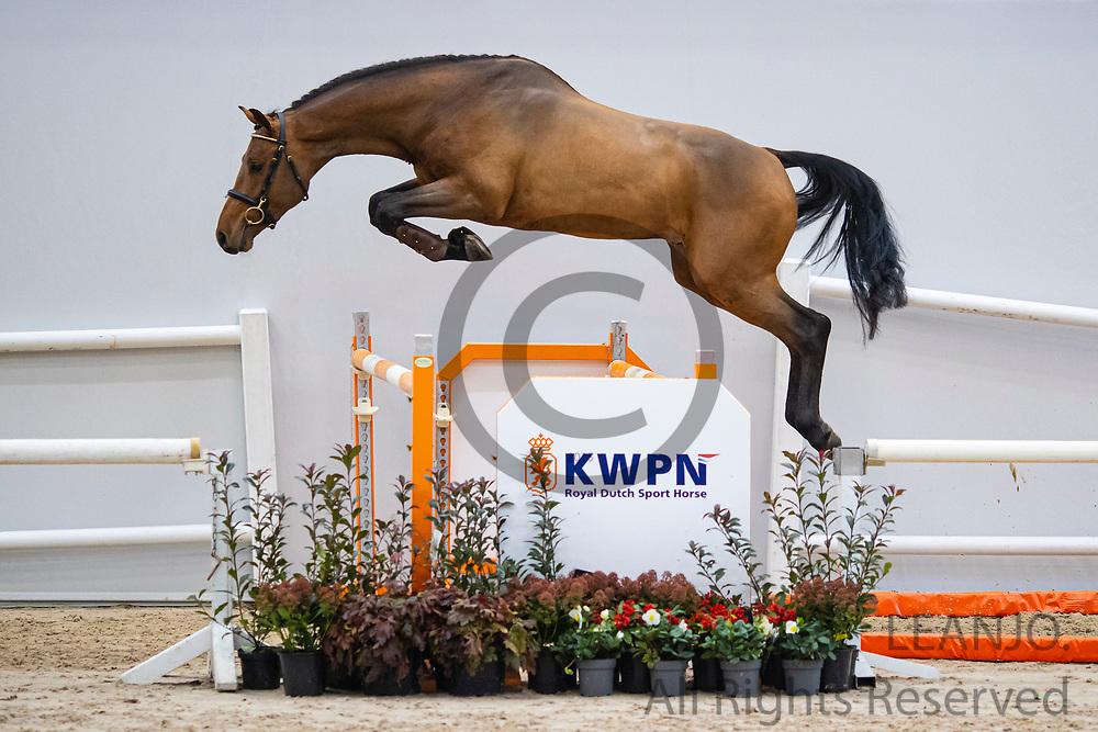 A La Minute Z<br /> KWPN Select Sale 2020<br /> © DigiShots