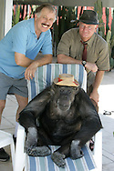 """EXCLUSIVE 24th June 2008, Palm Springs, California.  Cheeta's owner Dan Westfall (left) with filmmaker and campaign manager Matthew Devlen (right), of the """"Go Cheeta"""" campaign, who are trying to get Cheeta the 76-year-old Chimp a star on the Hollywood Walk of Fame. Cheeta was the star of many Hollywood Tarzan films of the 1930s and 1940s,  PHOTO © JOHN CHAPPLE / www.johnchapple.com<br /> tel: +1-310-570-9100"""