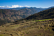 Terraced farmland and the Mansiri Himal mountain range and Himalchuli mountain on the 6th of March 2020 in the Mansiri Hilam subrange of the Himalayas in North Central Nepal.  Himalchuli is the second highest mountain in the Mansiri Himal, part of the Nepalese Himalayas. Himalchuli has three main peaks: East, West and North.