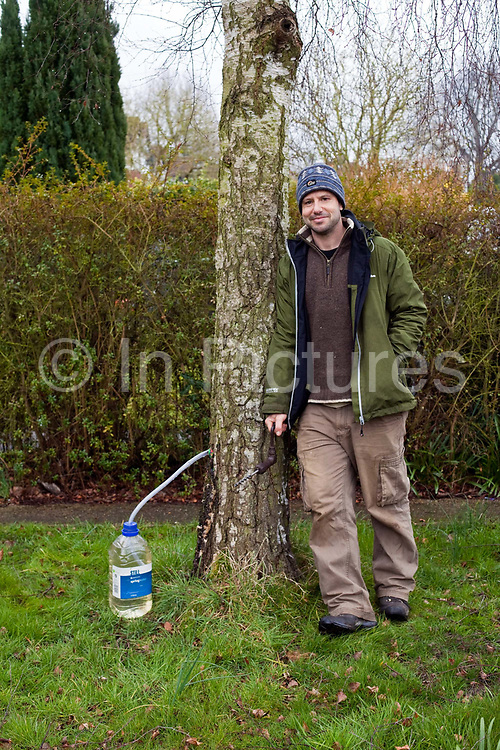 Fergus Drennan collects Birch sap from a friends garden, Chartham, Kent, UK.Fergus Drennan , known as 'Fergus the Forager' is a chef, wild food experimentalist and educator.