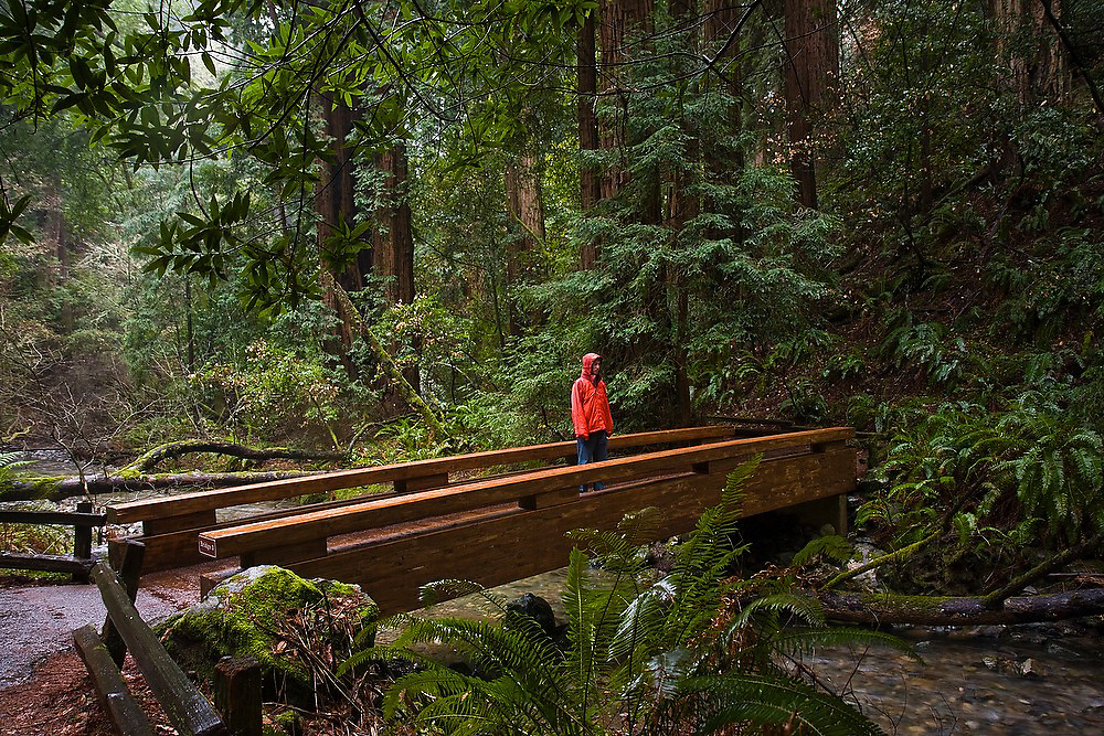 Hiker Zach Podell-Eberhardt stands on a footbridge contemplating the forest on a rainy day in Muir Woods National Monument, California.