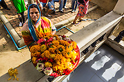 """15 SEPTEMBER 2013 - BANGKOK, THAILAND: A Hindu woman in Bangkok with a tray of marigolds for Ganesha on the last day of Ganesha Chaturthi celebrations at Shiva Temple in Bangkok. Ganesha Chaturthi is the Hindu festival celebrated on the day of the re-birth of Lord Ganesha, the son of Shiva and Parvati. The festival, also known as Ganeshotsav (""""Festival of Ganesha"""") is observed in the Hindu calendar month of Bhaadrapada. The festival lasts for 10 days, ending on Anant Chaturdashi. Ganesha is a widely worshipped Hindu deity and is revered by many Thai Buddhists. Ganesha is widely revered as the remover of obstacles, the patron of arts and sciences and the deva of intellect and wisdom. The last day of the festival is marked by the immersion of the deity, which symbolizes the cycle of creation and dissolution in nature.  In Bangkok, the deity (statue) was submerged in the Chao Phraya River.        PHOTO BY JACK KURTZ"""