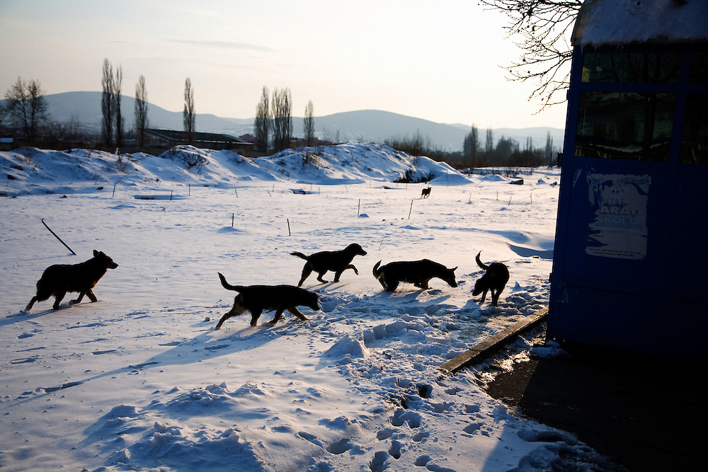 Wild dogs on the North bank of the Ibar River in Mitrovica.