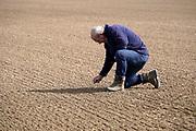 Nederland, Kekerdom, 18-5-2020  Een akkerbouwer bekijkt de gekiemde peterselie op een perceel . De plantjes zijn ondanks  beregene veel te klein vanwege de aanhoudende langdurige droogte en hebben een groeiachterstand ..Foto: Flip Franssen