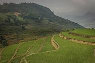 Green terraced rice fields cover the mountainous landscape, Sapa area, Lao Cai Province, Vietnam, Southeast Asia
