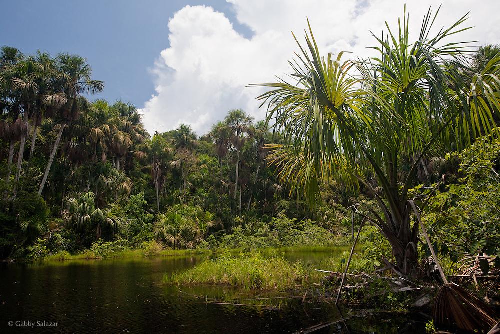 Pozo Don Pedro;  Aguajal Palm Swamp. Los Amigos Conservation Concession in Peru run by the Amazon Conservation Association and the Asociación para la Conservación de la Cuenca Amazónica. The concession is on the Rio Madre de Dios and the Rio Los Amigos. It protects lowland rainforest in the Los Amigos - Tambopata Conservation Corridor and has a biological research station called CICRA.