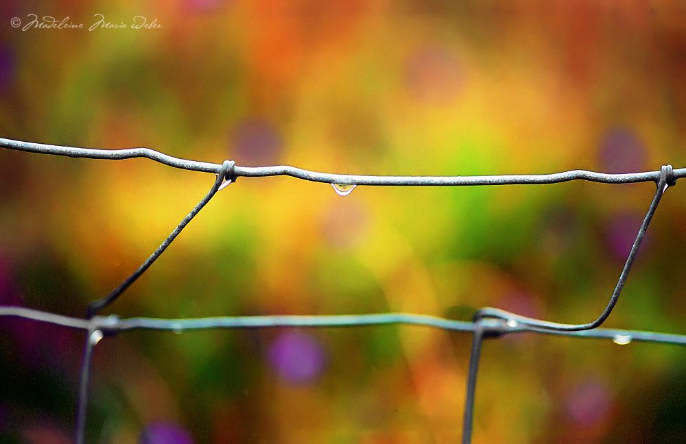 Raindrop on a Fence after Rainshower, co. Kerry Ireland / dr042