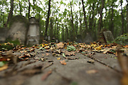 Jewish Cemetery, Warsaw Poland