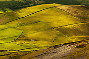 Amongst old field patterns on these ancient Welsh hills of the Llyn Peninsula in North Wales, lie even older patterns, of hut circles not easily visible from ground level. This hill is Moel Pen Llechog but all the hills around here were heavily populated (comparatively) byt ancient tribes from Bronze Age to Iron Age and even medieval times.