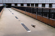 A day after the Covid 'Freedom Day', when social distancing and the wearing of face coverings are no longer mandatory, though the majority of City workers remain working from home, a squirrel walks over Bassishaw Highwalk, on 21st July 2021, in London, England.