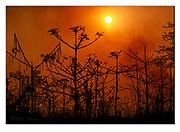 Bush fire in Kaziranga NP, India. Nikon D5, 70-200mm @ 140mm, f16, 1/8000sec, ISO500, Manual modus