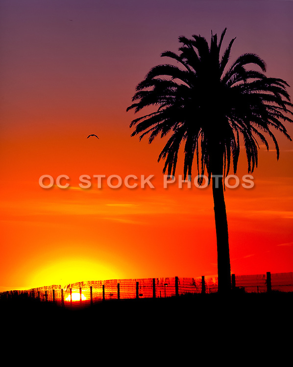 Vivid Sunset With Silhouette Of A Palm Tree