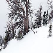 Tyler Hatcher skis the Teton Backcountry during a severe winter storm near Jackson Hole Mountain Resort, Teton Village, Wyoming.