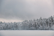 Brief wind gusts throws powdery snow upwards from the trees. Silent morning over frozen nameless lake and surrounding forests on snowy winter day in Vidzeme, near Nītaure, Vidzeme, Latvia Ⓒ Davis Ulands   davisulands.com