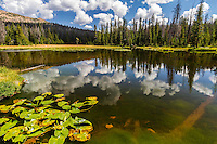 A warm Summer reflection in the waters of Lake Marion in the Uinta Mountains in Eastern Utah.