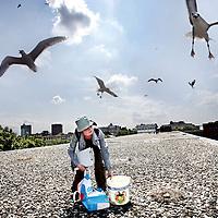 Nederland, Leiden,5 juni 2007..Universiteitsonderzoekster Anne bestudeert meeuwennesten op daken en verricht onderzoek dat het gedrag en leefgewoonten van de stadsmeeuw in kaart moet brengen..Op de foto wordt Anne aangevallen door meeuwen die hun nesten verdedigen..De echte eieren worden door valse eieren vervangen.