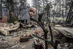 November 15, 2018 - Paradise, California, U.S. - A ceramic doll head is perched on a branch as one of the only remains infant of a burnt mobile home inside the Pine Springs Mobile Home Park on Clark Road from the Camp Fire Thursday. (Credit Image: © Renee C. Byer/Sacramento Bee via ZUMA Wire)