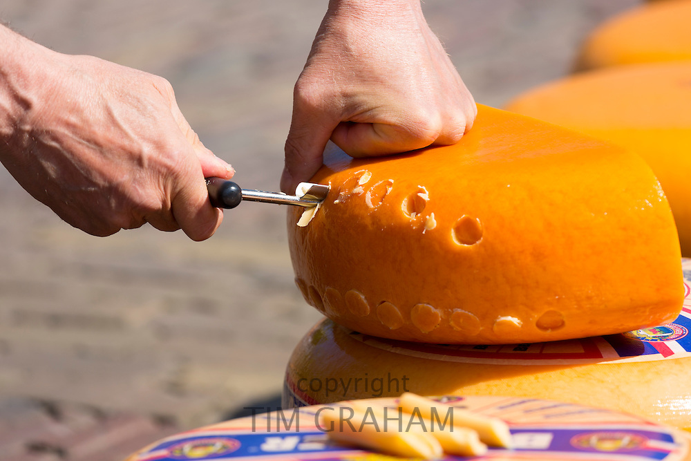 Sample of Gouda wheel being sampled by hand with cheese scoop at Alkmaar cheese market, The Netherlands