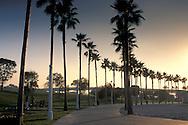Palm tree lined sidewalk walkway recreation path at sunset, Long Beach Harbor, California