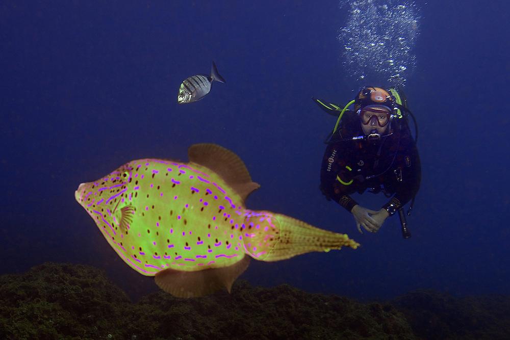 04/Abril/2014 Islas Canarias. El Hierro.<br /> Sus Anita con un pez gallo. en El Desierto.<br /> <br /> © JOAN COSTA