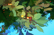 An abstract images of berries and leaves