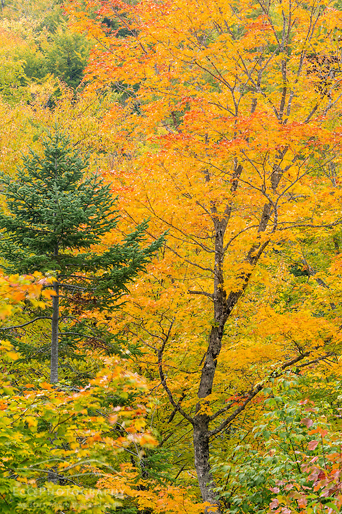 Fall foliage in the Orbeton Stream valley in Madrid Township, Maine.
