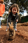 Toddler with a rabbit at a petting corner in a children's zoo