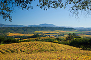 Looking East toward Mt. St. Helena over Autumn vineyards in the Dry Creek Valley, a highly acclaimed wine growing appellation in Northern California's Sonoma County.