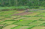 Rwanda, Workers work in one of a patchwork of fields in a valley in Butare, Rwanda.
