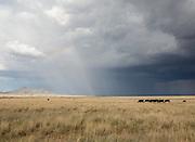 Monsoon rains over the Sonoita plains  along AZ-83