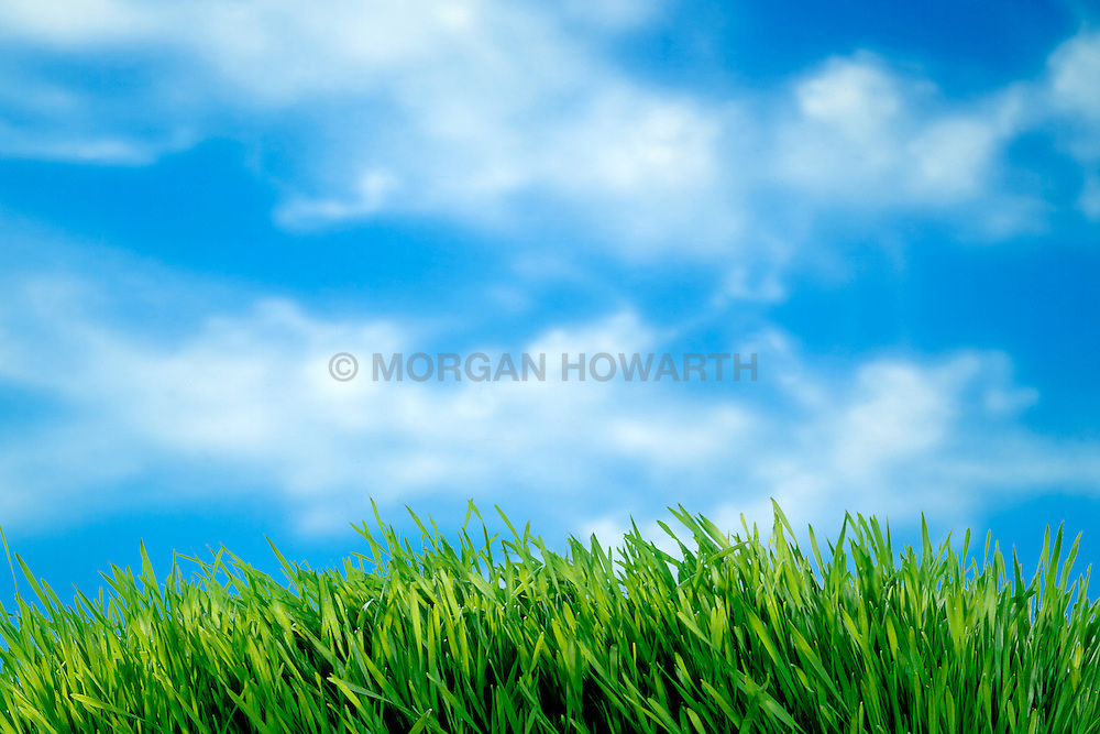Sky and clouds with tuft of grass in the foreground on a bright sunny day