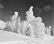 """ackroyd_01177-52. """"Timberline. Heavy snow, pictorials. December 16, 1948"""" ice-covered frozen trees on Mt. Hood next to Timberline Lodge."""
