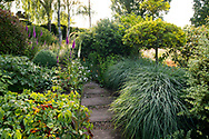Digitalis and dew covered ornamental grass along the Serpentine Walk in The Laskett Gardens, Much Birch, Herefordshire, UK