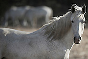 IN MY MIND, THIS MARE CELEBRATES LIFE AND EMBODIES HAPPY FORTUNE DESPITE HER HARDSHIPS. I BELIEVE THIS BECAUSE SHE IS A SURVIVOR AND HER INNATE CHARACTERISTIC TO PUSH THROUGH ADVERSITY WILL LEAD HER FORWARD. SHE WILL REMAIN STRONG AND HAPPY - BECAUSE SHE WOULD HAVE HER OUTLOOK ON LIFE NO OTHER WAY~