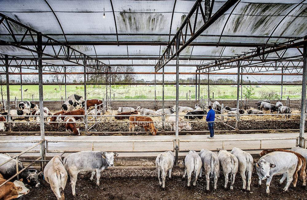 Nederland, Baambrugge, 23 april 2016.<br /> koopeenkoe.nl, een duurzaam bedrijf, waar je online SAMEN een koe kan kopen. Het vleespakket wordt pas opgestuurd als de hele koe verkocht is. Op het terrein is een boerderij, slagerij, etc. <br /> Initiatiefnemer is Yvo van Rijen.<br /> <br /> <br /> Netherlands, Baambrugge, April 23, 2016<br /> koopeenkoe.nl, a sustainable business where you can buy a cow TOGETHER online. The meat packet will only be sent once the whole cow has been sold. On the property there is a farm and a butcher. Initiator is Yvo van Rijen.<br /> <br /> Foto: Jean-Pierre Jans